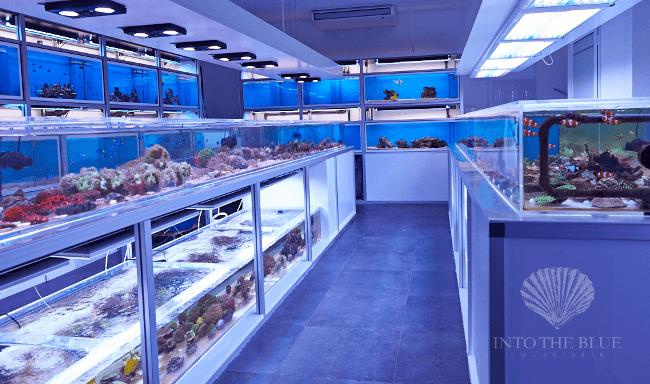 Razzia bei bushido t uschte rapper einbruch vor um 360 for Aquaristik shop
