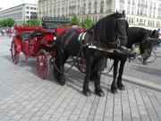 Pferdedroschke auf dem Pariser Platz. Foto: Michael
