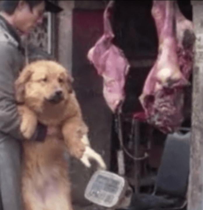 china fleisch festival hunde erschlagen geh utet und ausgeblutet. Black Bedroom Furniture Sets. Home Design Ideas