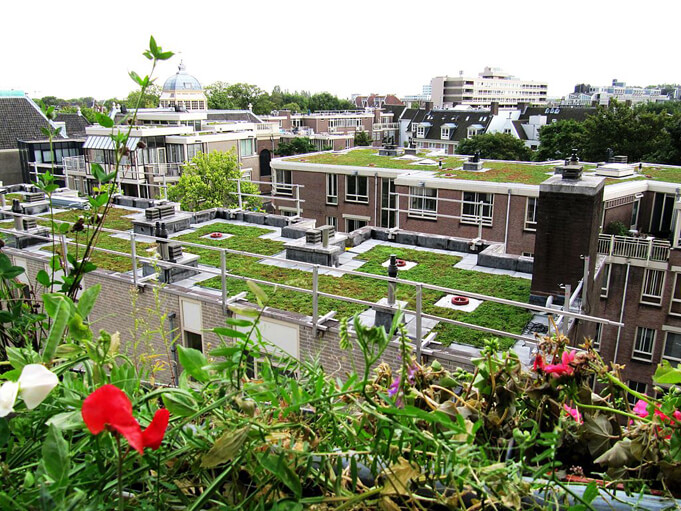 Green roofs in Amsterdam.