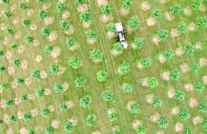 paulownia bäume geldanlage treeme
