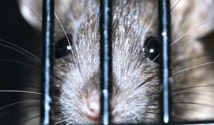 Wie Man Den Ratten In Berlin Helfen Kann Acht Tipps