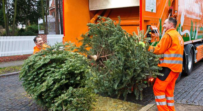 Die BSR holt die Weihnachtsbäume der Berliner wie jedes Jahr kostenlos ab. (Foto: BSR)