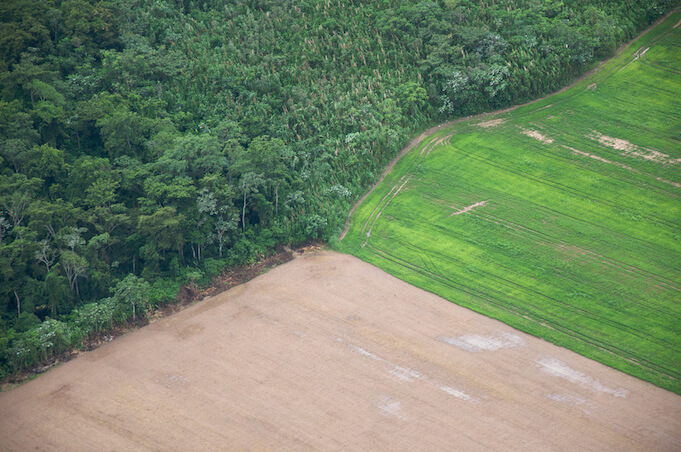Illegale Abholzung dezimiert den Amazonas Regenwald (Foto: PROSam Beebe)