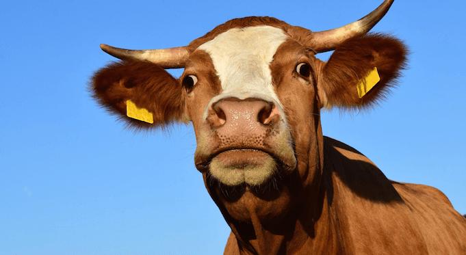 Maria Krautzberger Steuern Milch Fleisch Lachgas