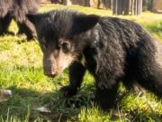 Zoo Berlin Lippenbär braucht Namen