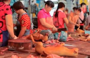 Beim Festival in Yulin werden jedes Jahr über 10.000 Hunde getötet und verspeist. (Screenshot: YouTube)