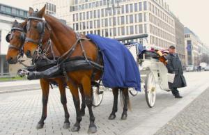 Aufgrund einer Petition steht Berlin kurz vor einem Verbot von Pferdekutschen.